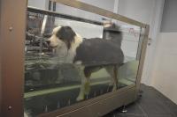 L'arthrose du chien : bienfaits de sa gestion par l'hydrothérapie.
